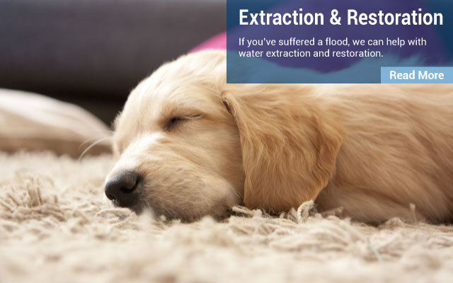Extraction & Restoration