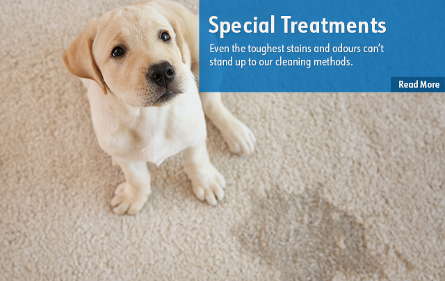 Pet Odor Special Treatments Rug & Carpet Cleaning Niagara